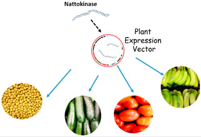 The origin of Nattokinase