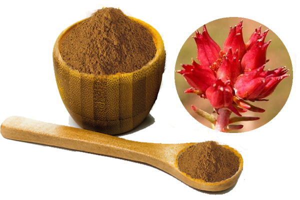 rhodiola rosea extract.png