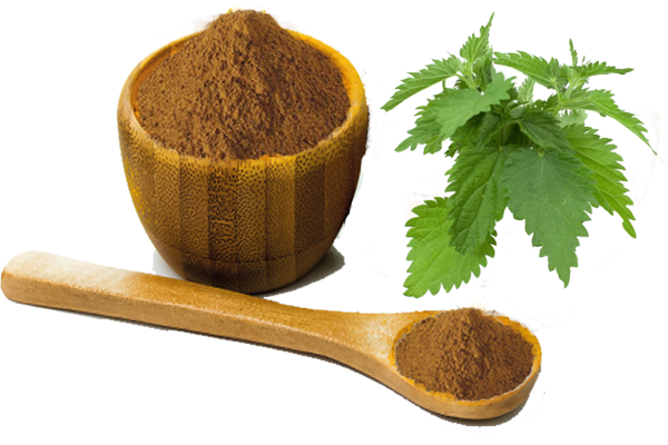 stinging nettle root extract.png