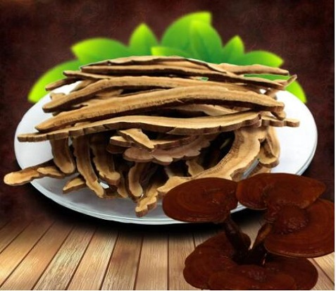 Prevention and Treatment of Chronic Bronchitis for Ganoderma Lucidum